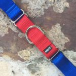 MELLY Collars - Taylor Red Blue - 1